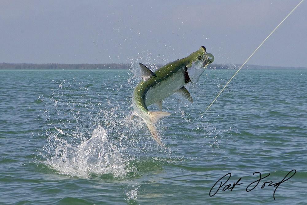 Tarpon Florida Fishing