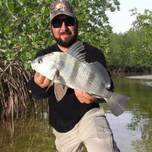 Great species pic of a black drum