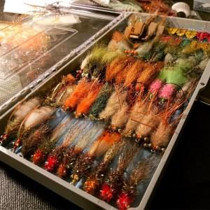 < ONE FISH TWO FISH REDFISH > – – –  …
