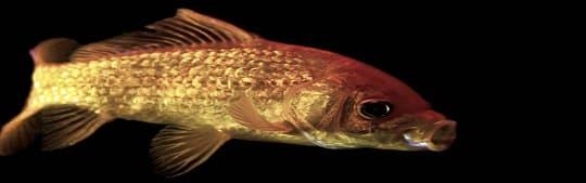 fish antibiotics