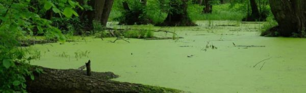 Swampy Pond Water