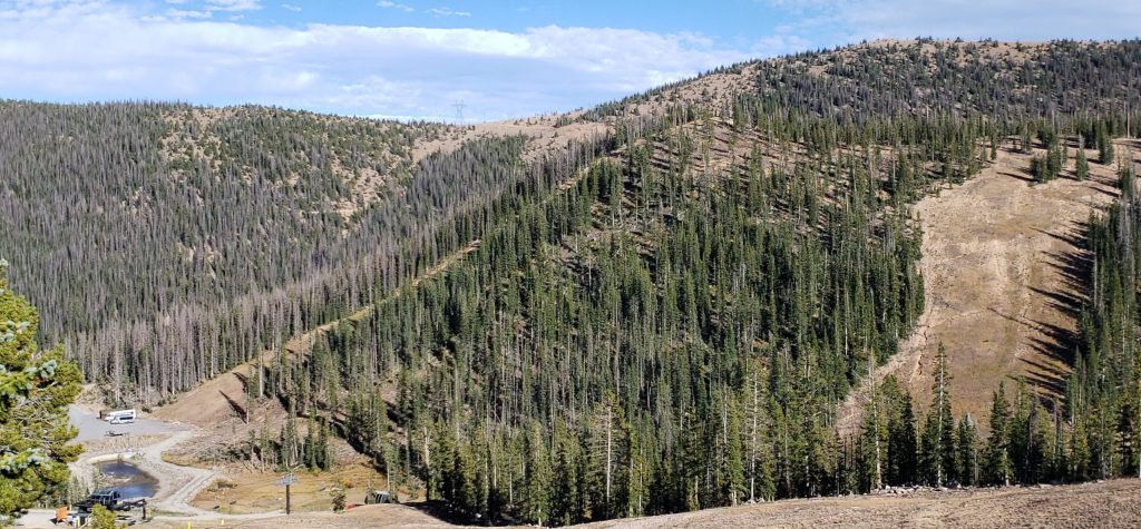 Gunbarrel Trees