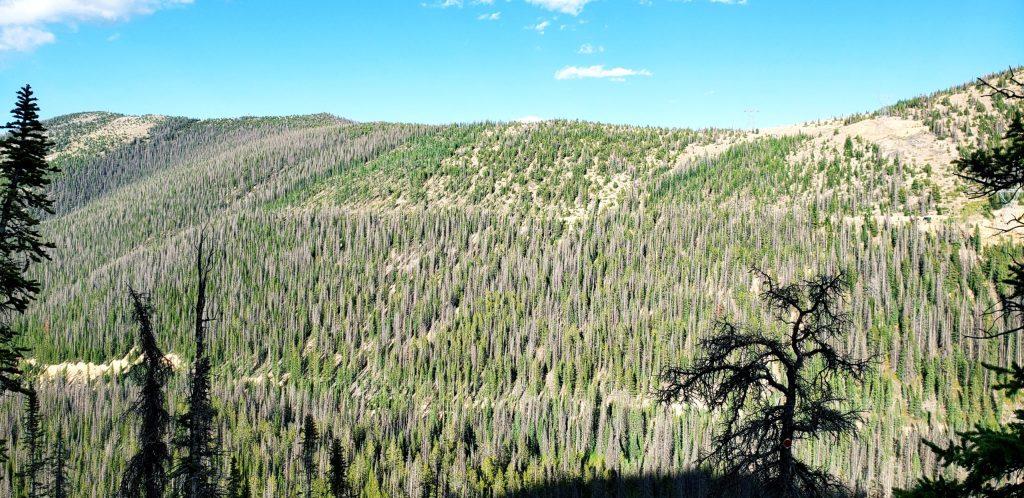 Monarch Ridge Logging