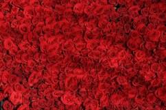 Kosmetik mit Rosen