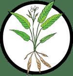 Organic Arrowroot _Organic Deodorant Ingredient