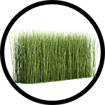 horsetail-plant_150-min