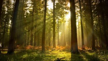kedr forest
