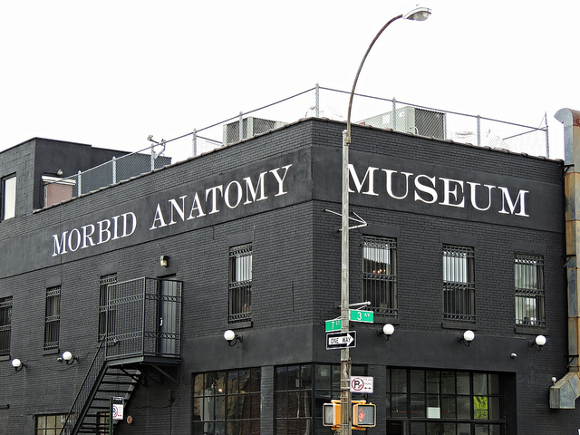 Visiting Morbid Anatomy Museum in Brooklyn