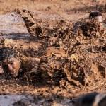 Skinny Dipping in Deep Clay Mud