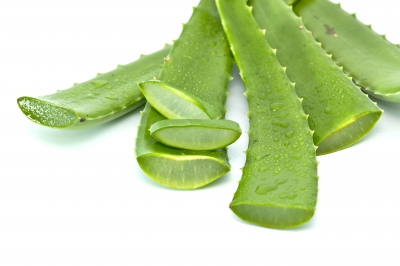 Aloe Vera – The Miracle Remedy
