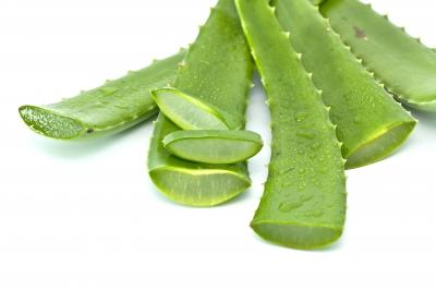 Aloe Vera – The Miracle Remedy