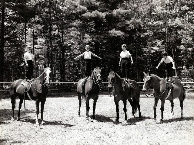 Sunningdale Horses