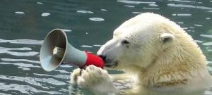 Isbjørnane ropar på hjelp frå SV for å berge klimaet. Foto: Grant Neufeld, Flickr