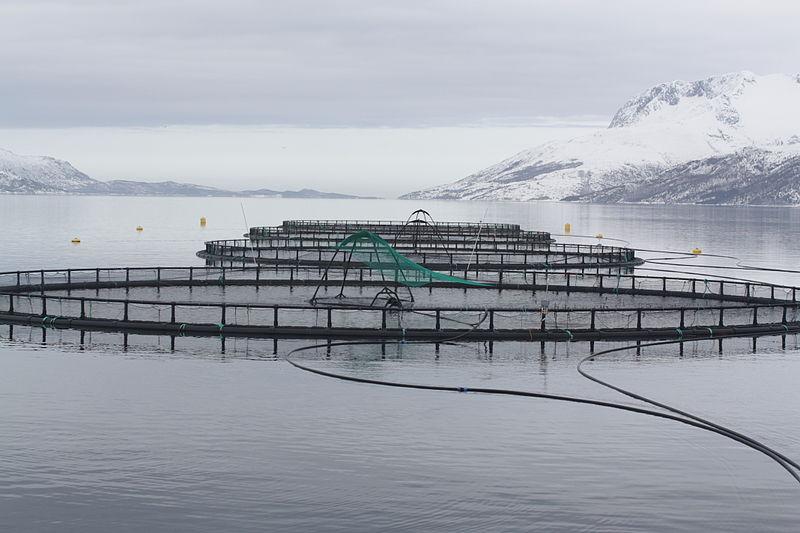 Fiskemerder. Foto Thomas Bjørkan