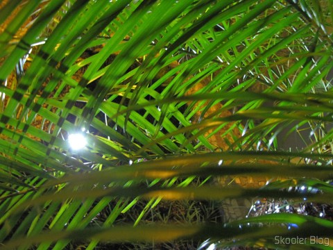 Palm leaves illuminated by the spotlight with Phoenix 30 Solar LED lamps 2W 7000K 200LM waterproof (Waterproof Solar 2W 7000K 200lm 30-LED Flood Cool White Light Project Lamp – Black)