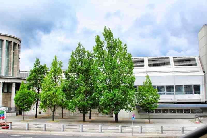 Baum trotzt Beton