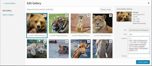 image optimization search engines