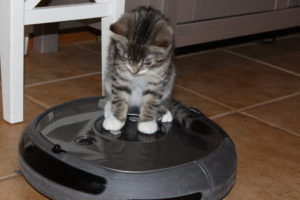 a kitten on a robot vacuum