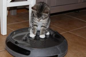 a kitten on a robot vacuum