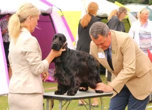 Domare David Shields mycket sympatisk och snäll mot hundarna