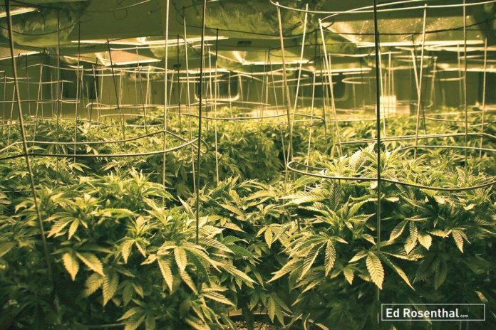 SPARC medium scale greenhouse winter harvest for oil.