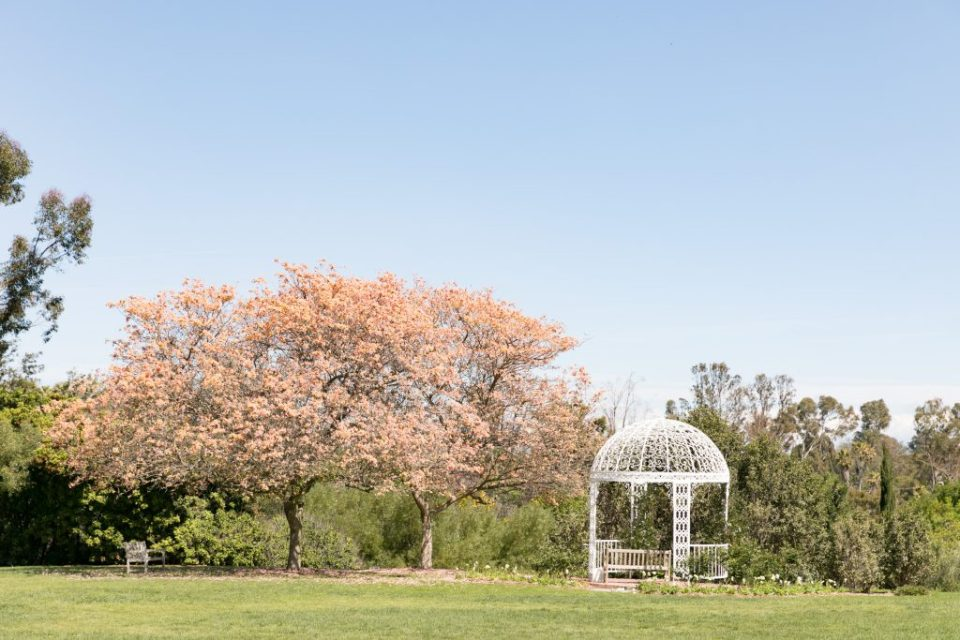 cherry blossom and arch palos verdes
