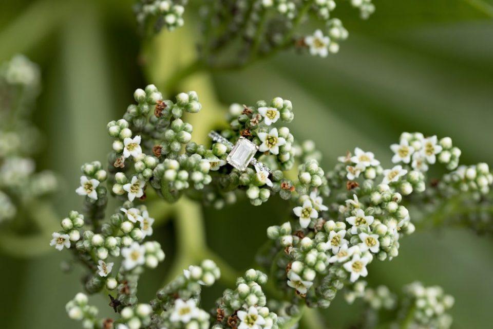 wedding ring in native hawaiian plants