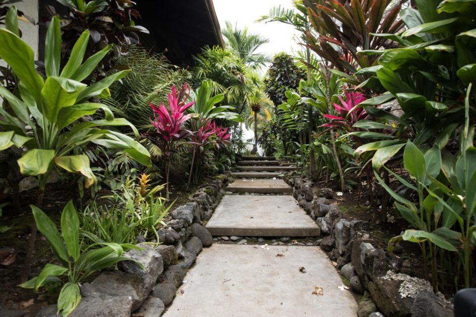 tropical plants at Kealakekua Bay Wedding Venue