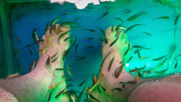 Chiang Mai Fish Spa