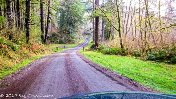 Logging Road #3