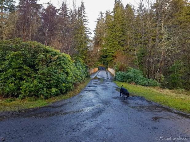 Dog on Lanrick Estate