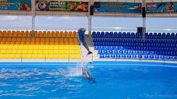 Dolphin Show Odessa