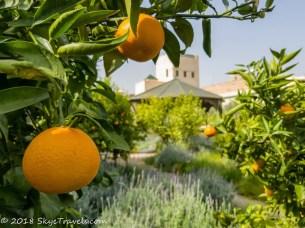 Marrakech Secret Garden