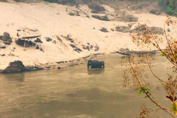 Elephants in Pakbeng