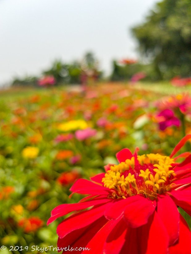 Buddha Park Flowers #2