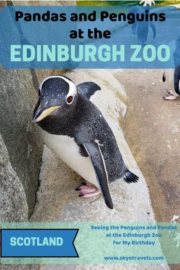 Pandas at the Edinburgh Zoo Pin