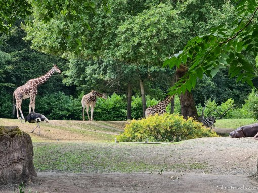 Safari Animals at Seattle Zoo