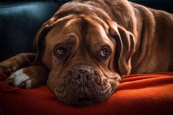 Παράγοντες Μακροζωίας των Σκύλων
