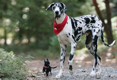 Μικρόσωμοι και Μεγαλόσωμοι Σκύλοι: Διαφορές Συμπεριφοράς
