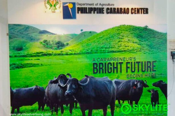 philippine_carabao_center_07