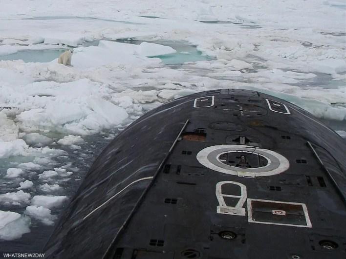 الدب القطبي يراقب الغواصة الروسية عن كثب