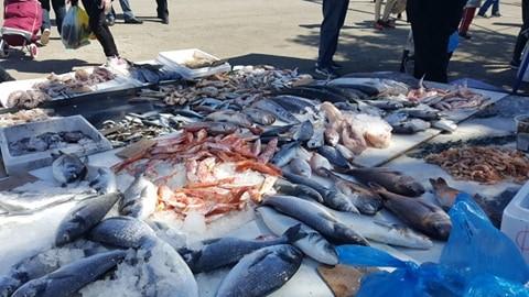 Ανακοινώθηκαν μέτρα στήριξης των αλιέων