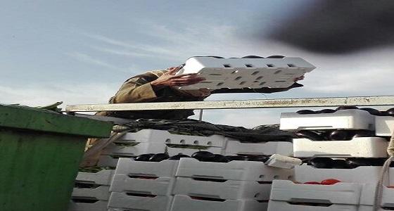 بالصور.. إتلاف 1290 كجم أغذية فاسدة في تبوك