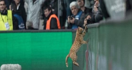 بالفيديو.. قطة تضع بيشكتاش التركي في خطر العقوبة
