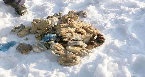 بالصور.. الشرطة الروسية تكشف غموض العثور على 54 يدا بشرية في الجليد