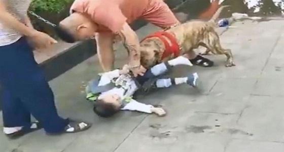 بالفيديو.. قتال عنيف بين مارة وكلب لإنقاذ طفل من أنيابه