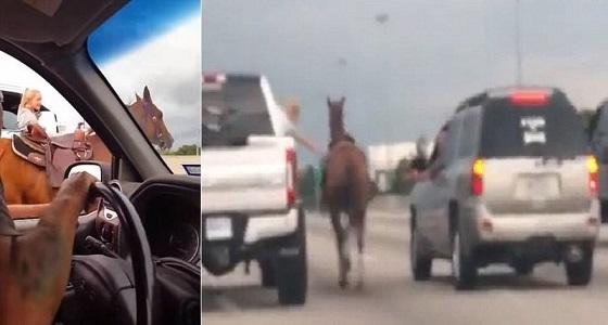 بالفيديو.. سيدة شجاعة توقف حصان هارب على الطريق السريع من داخل السيارة