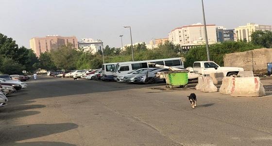 بالصور.. ذعر بين طالبات جامعة أم القرى بعد انتشار الكلاب الضالة