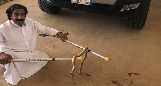 شاهد.. مواطن من ذوي الهمم يقتل ثعبان بعد معركة دامت 10 دقائق