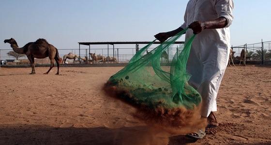 """الإمارات تستخدم """" روث الإبل """" لإنتاج الأسمنت"""